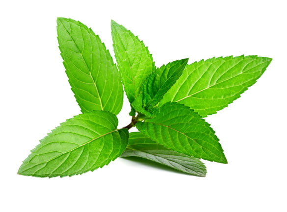 Detox food is good for you-Peppermint