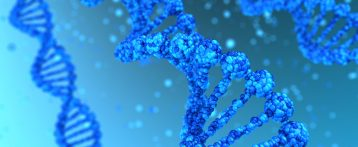 Mutation That Interferes with Genetic Instructions May Cause Hereditary ALS, Study Reports