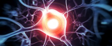 Cell Metabolite Reduces Neuronal Death in ALS, Study Shows