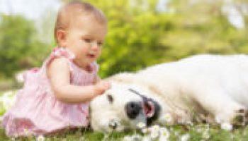 Exposure to Dogs May Keep Kids from Developing Allergies